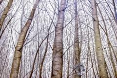 bosque.lechuza
